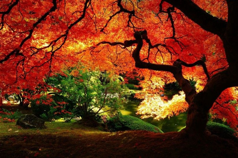 Beautiful Autumn Trees Wallpapers Images & Pictures - Becuo