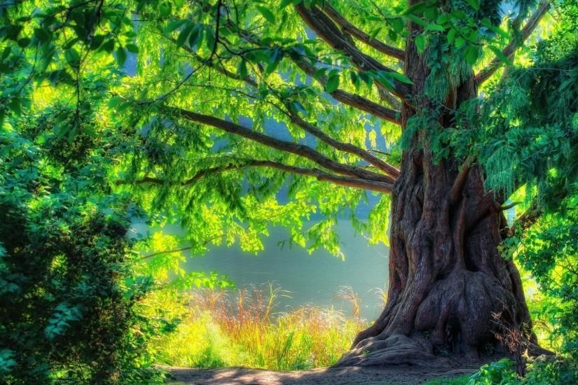 Beautiful Nature Images HD Wallpaper of Nature - hdwallpaper2013.com