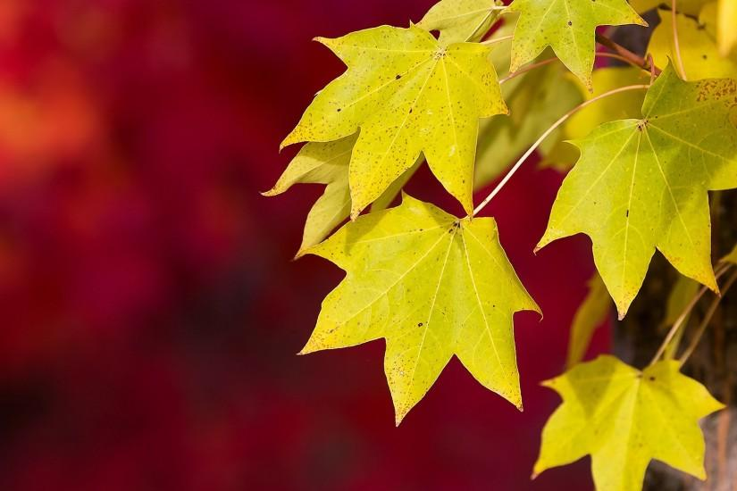 Autumn Leaves Wallpaper Background 1284