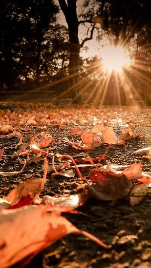 Nature iPhone 6 Plus Wallpapers - Autumn Leaves On The Ground Sunset iPhone  6 Plus HD