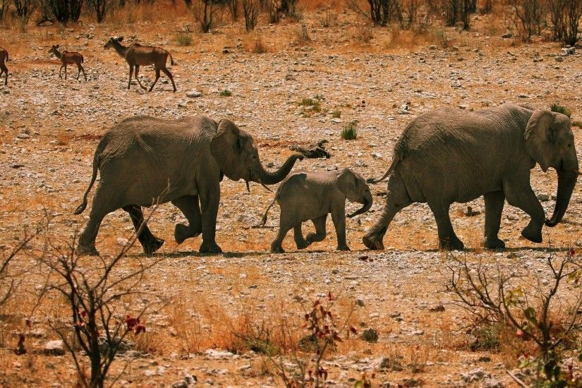 Baby Animals - Babies Elephant Elephants Africa Baby Animals Desktop  Pictures for HD 16:9