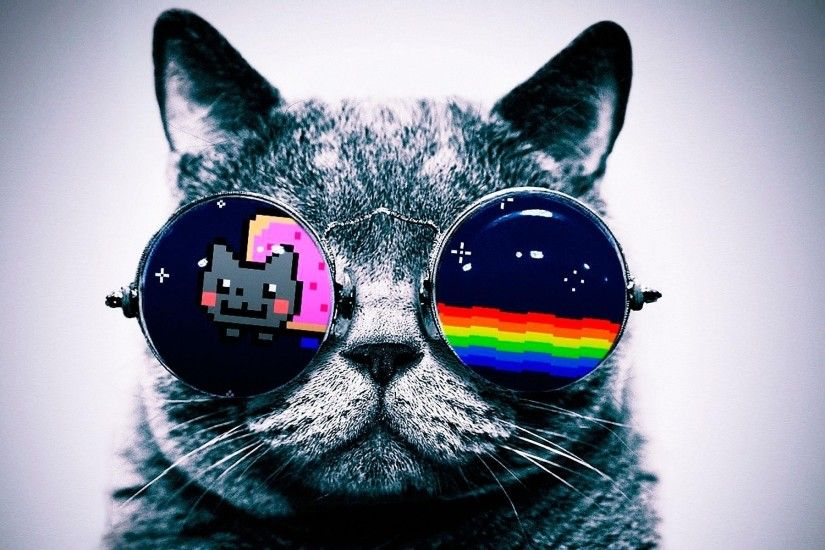 nyan cat cat glasses Wallpapers HD / Desktop and Mobile Backgrounds