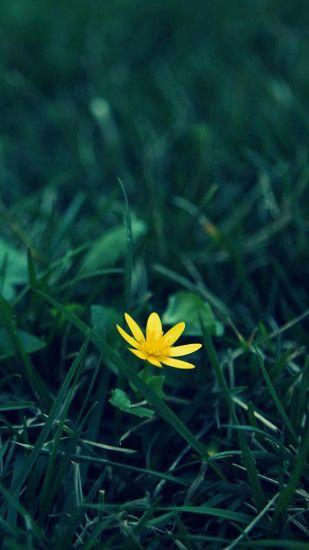 Nature Little Yellow Flower Green Grassland Blur Background #iPhone #6  #plus#wallpaper
