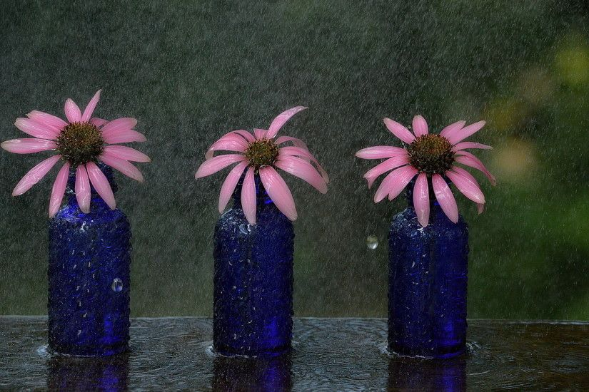 ... free vintage flowers wallpaper download high definiton wallpapers .