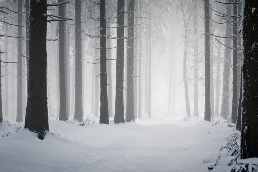 Dark Winter Forest Background.