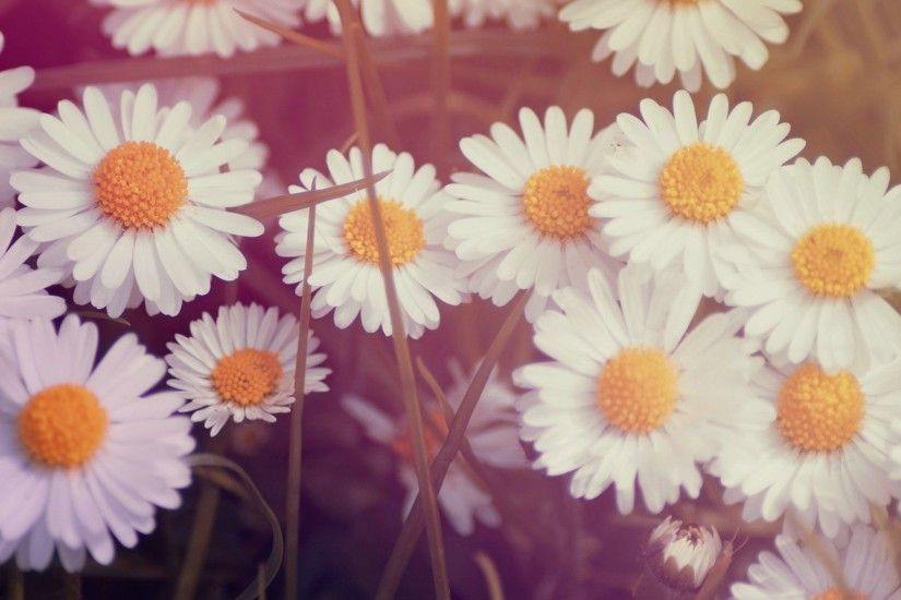 vintage flower pc backgrounds hd free