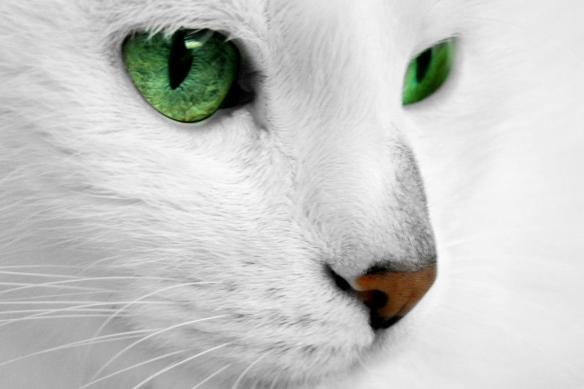 Love a cat with fiercely green eyes. White cat with green eyes by ReconReno.