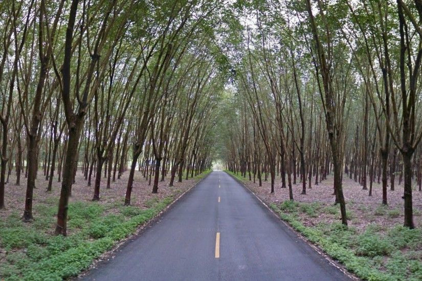 District Tag - Road Thailand Tree Trees Scene Day Amazing Forest Beautiful  Pretty Green Landscape Violet