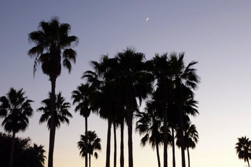 palm tree wallpaper tumblr. hereu0027s a tropical scene with the silhouette  of palm trees and