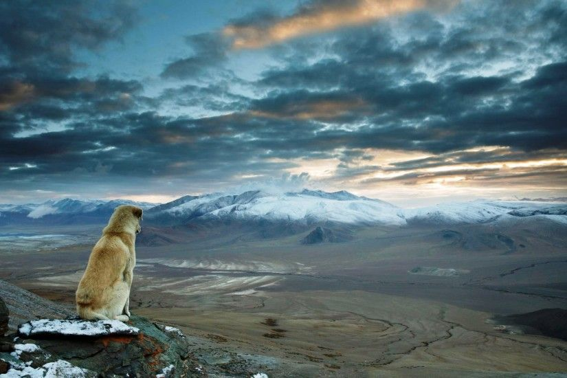 nature, Landscape, Dog, Mountain, Himalayas Wallpapers HD / Desktop and  Mobile Backgrounds