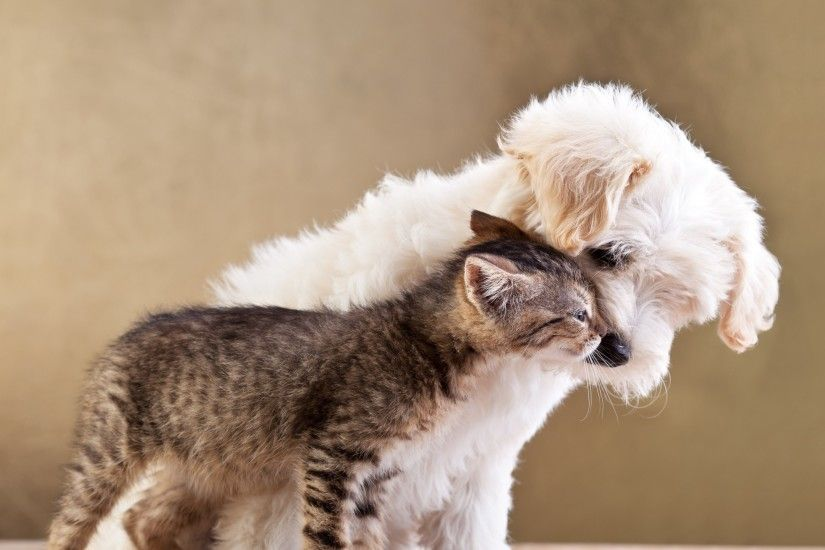 Preview wallpaper puppy, kitten, friends, animals, caring, tenderness  2560x1440