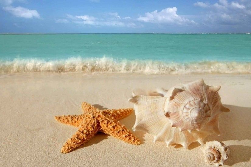Beaches Starfish Seashells Water Sand Wallpaper HD Nature Android