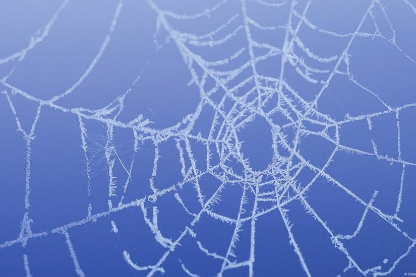 Background In High Quality - spider web