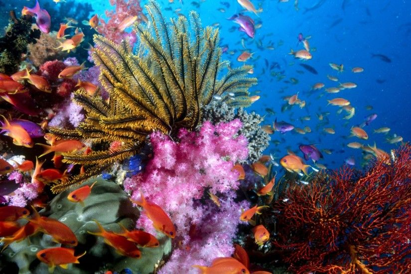 Colorful Sea Creatures HD Wallpaper