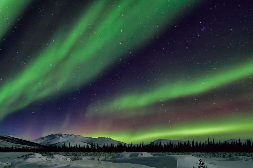 Wallpaper northern lights, winter, snow, forest, night, aurora .