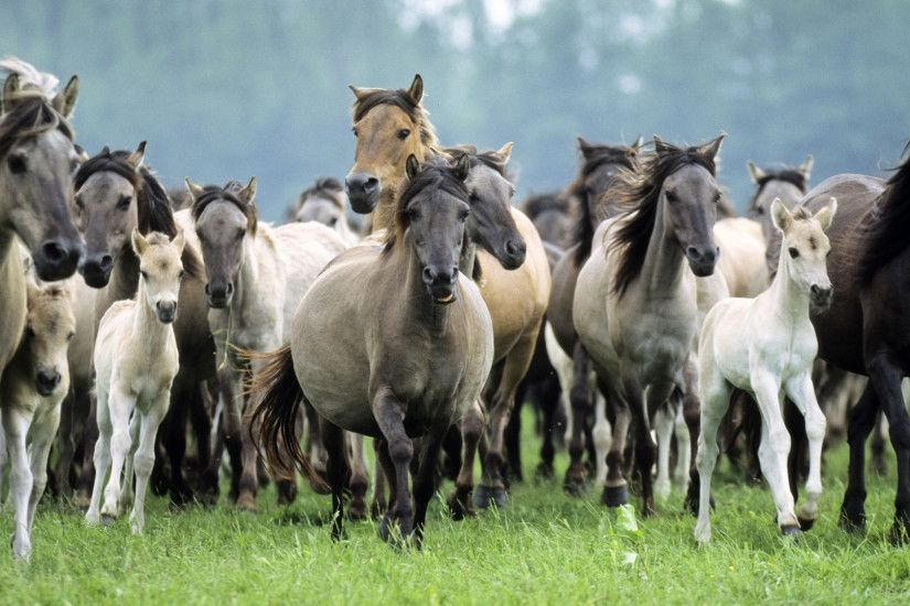 Wild Animals Horses Running Germany Pics Desktop P Os Free 246801 Wallpaper  wallpaper : wild animals,animals - Free desktop wallpapers, hd wallpapers,  ...