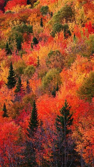Fall with full of trees wallpaper for iPhone