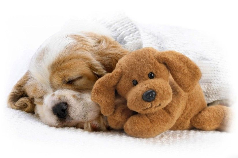 Cute Puppy Pictures Wallpapers