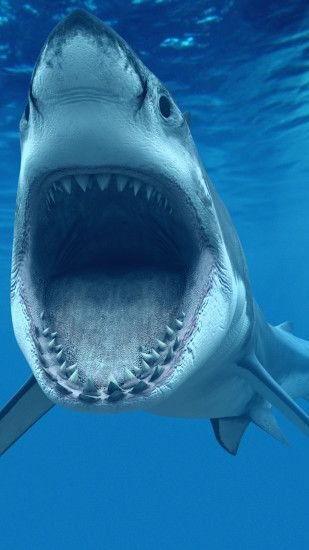 Great White Shark iPhone Wallpapers