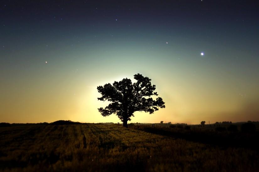 Tree at Night HD PC Wallpapers