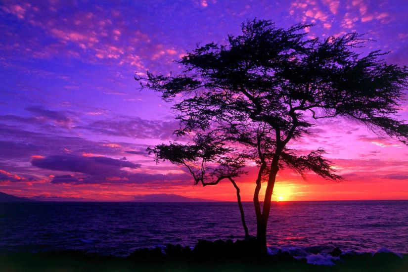 Purple Sunsets 23197