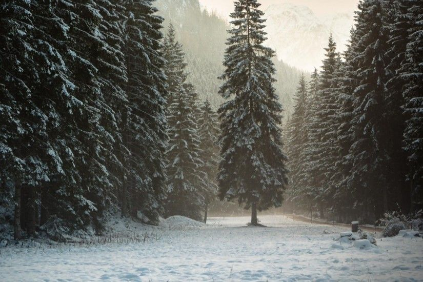 1920x1080 Wallpaper austria, tyrol, alps, mountains, forest, snow, winter