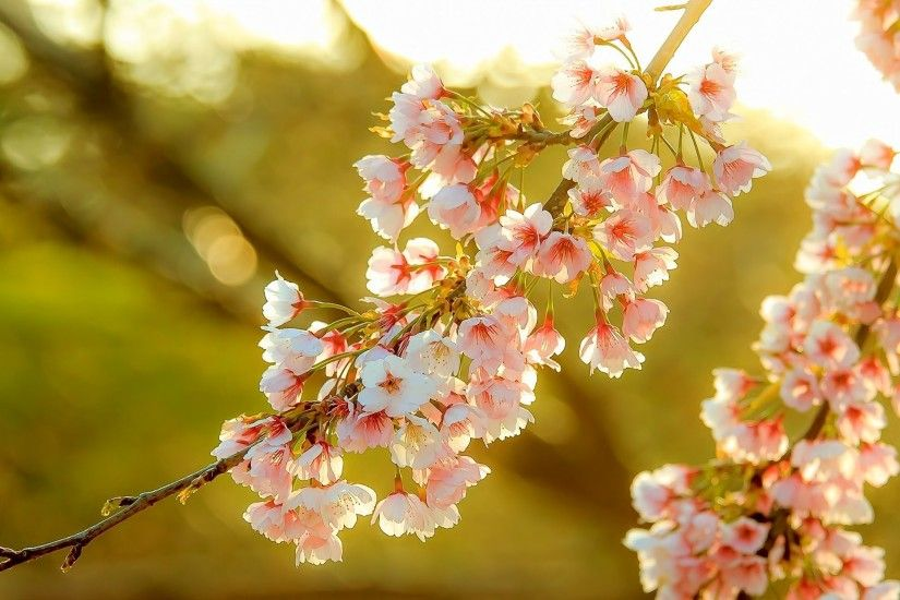 Color blossom flower tree fruit wallpaper | 1920x1280 | 309675 .