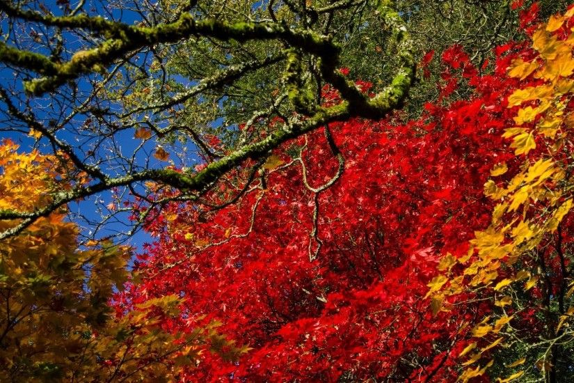 Miscellaneous Trees Tree Fall Colors Leaves Season Nature Bright Autumn  Free Desktop Background : Miscellaneous HD