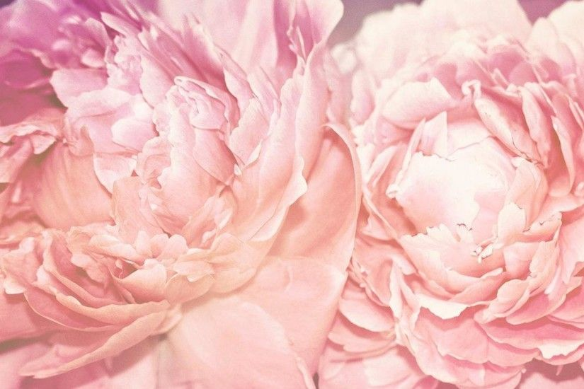 peonies wallpaper 7357