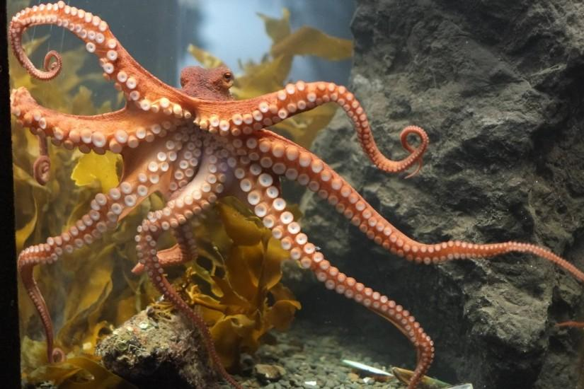 Octopus free download