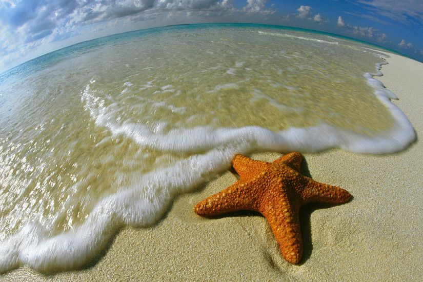 Big Starfish Desktop Background. Download 1920x1080 ...