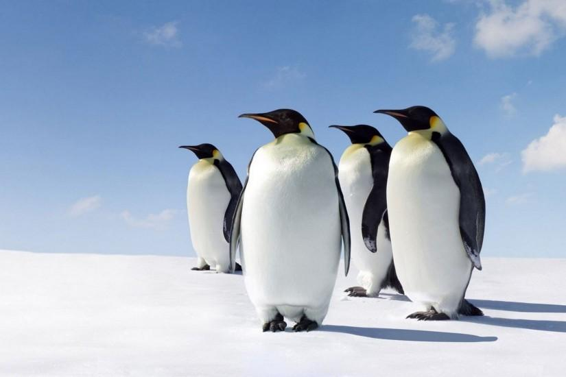 Cute Penguins Wallpaper HD Download For Desktop & Mobile