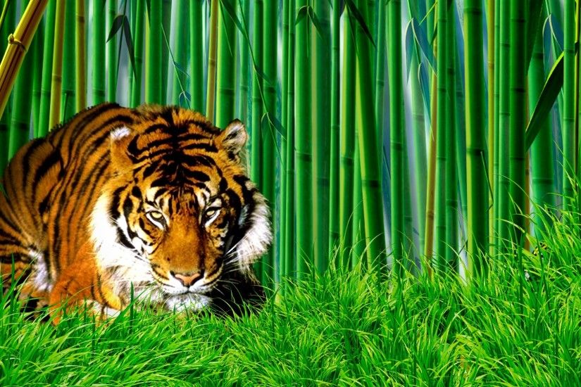White Tiger Adult HD Wallpaper | Facebook Covers & Twitter Headers |  Pinterest