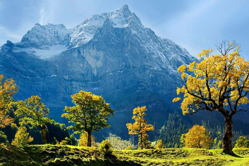 Maple Trees Snow Mountains Austria
