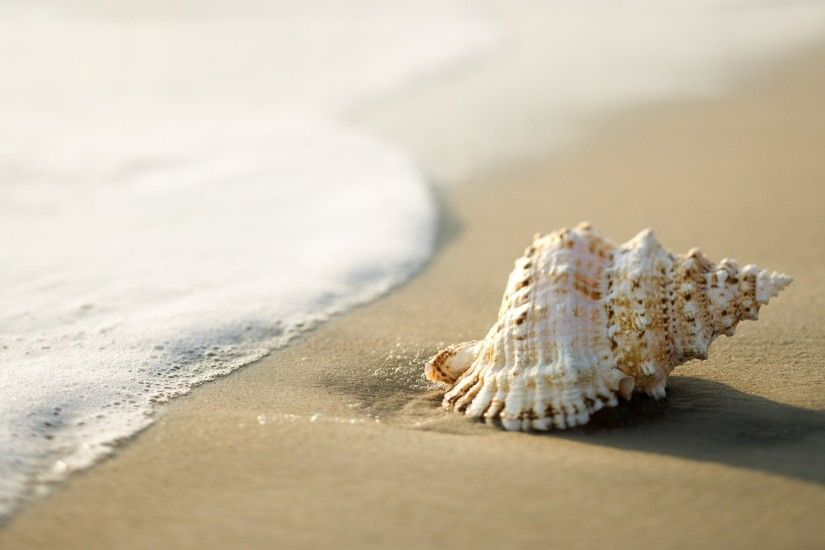 seashells, Beach, Sand, Coast, Nature Wallpapers HD / Desktop and Mobile  Backgrounds
