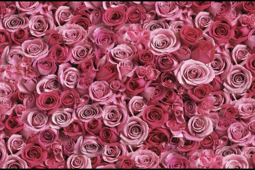 pink n red roses background design
