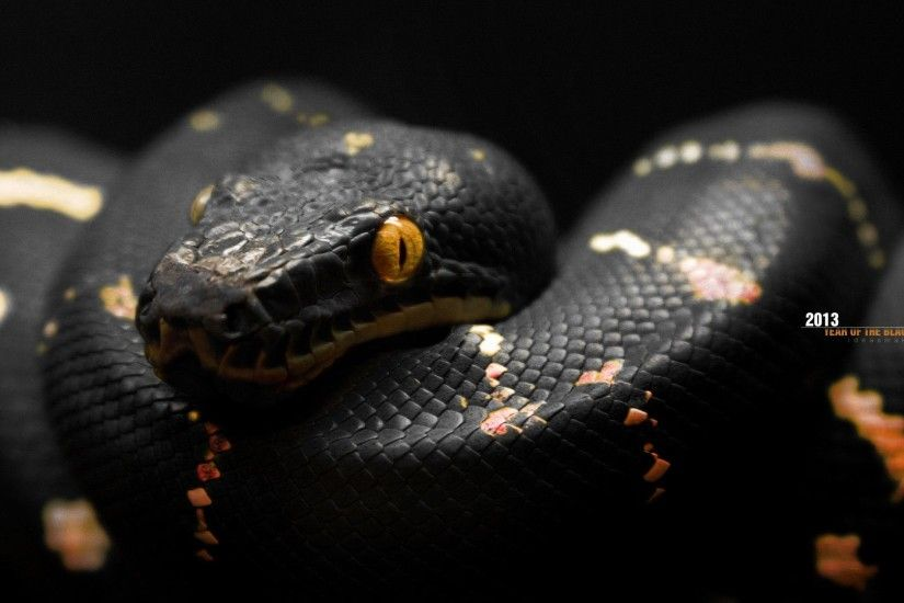 Snake HD Wallpapers Backgrounds Wallpaper 1600×1000 Black Snake Wallpapers  (43 Wallpapers) |