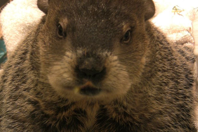 Groundhog Day 2011: Will Staten Island Chuck see his shadow? | SILive.com