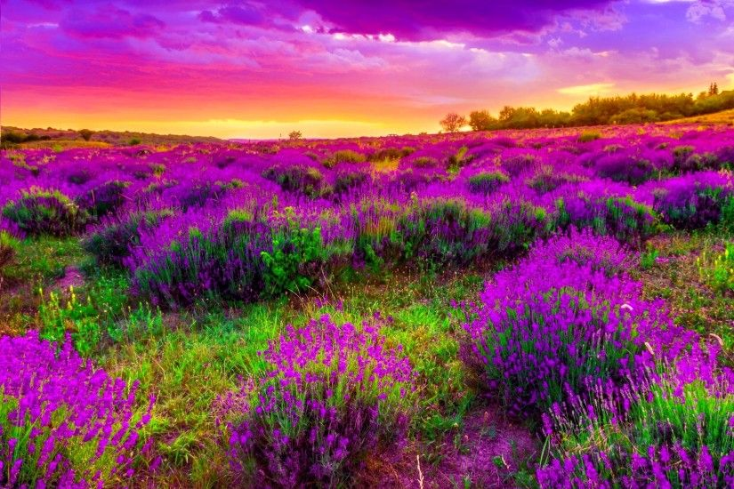 Spring High Definition Wallpaper Spring Dusk Desktop Background