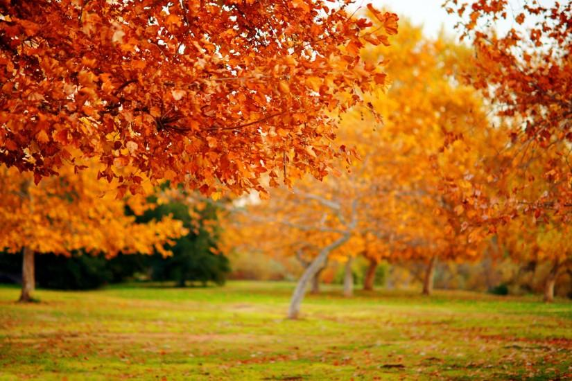 Autumn nature Fall Nature Wallpapers High Resolution
