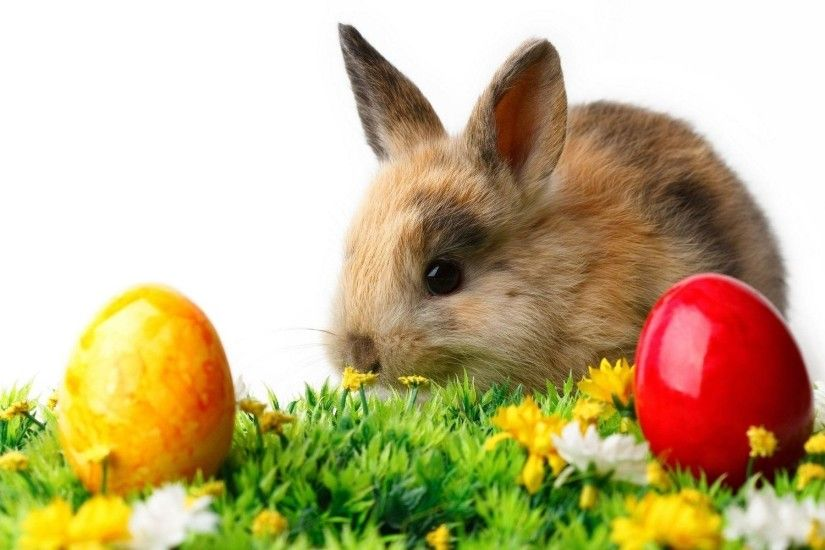 Animals wallpaper easter love mothers wallpapers 1920x1080 px .