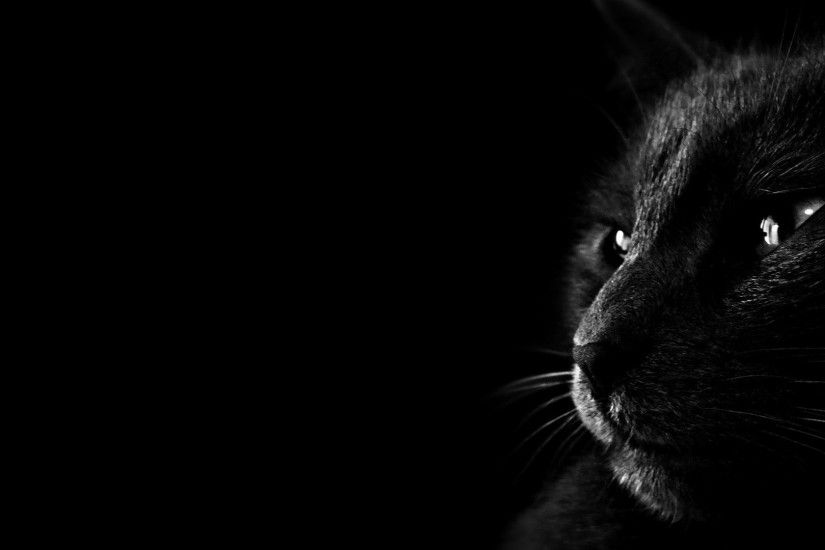 nice black cat photo hd