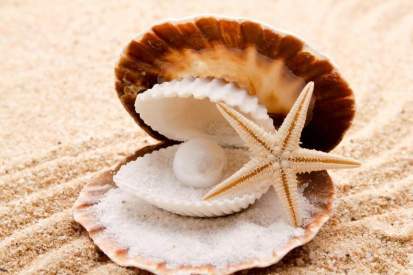 seashells starfish pearl sand beaches shell clam wallpaper background