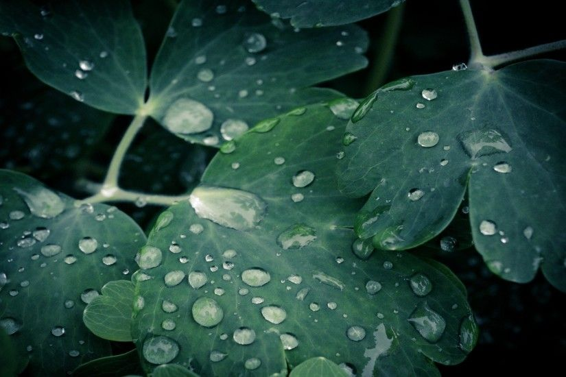 Leaves Best Desktop Water Widescreen Awesome Background Hearts Drops Depth  Field Nature Love