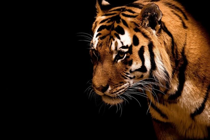 1920x1080 Tiger in the dark. How to set wallpaper on your desktop? Click  the download link from above and set the wallpaper on the desktop from your  OS.