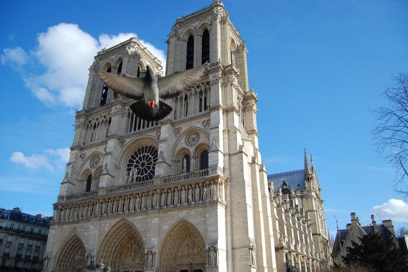 Paris France Notre Dame Architecture Cathedrals Pigeons #wallpapers  #widescreen