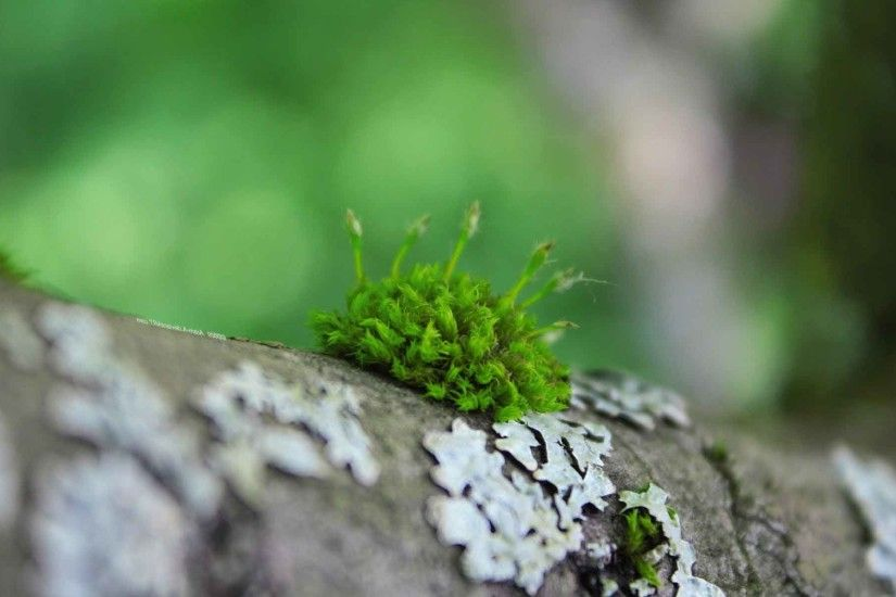 Trees Logs Nature Macro Moss Depth Field Wallpapers Of For PC