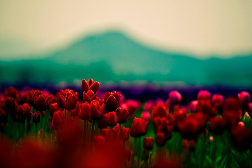 top floral background tumblr 2560x1600