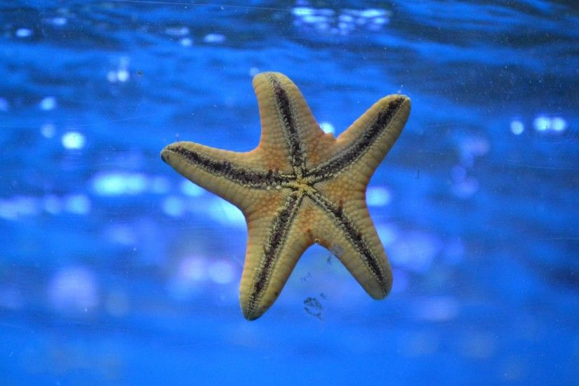 3840x2160 Wallpaper starfish, underwater, swim