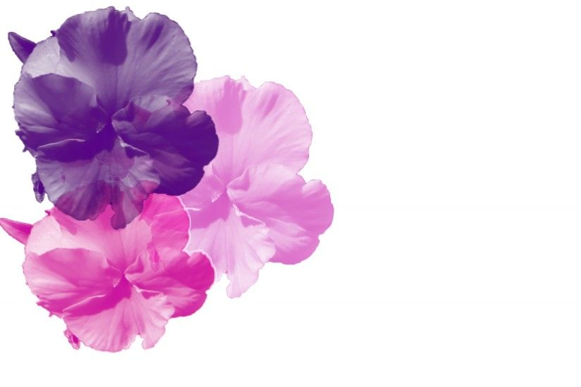 Purple Pink Pansy Background
